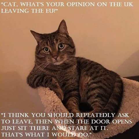cat UK brexit